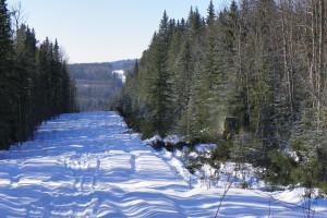 Heavy Equipment Brush Clearing - Alberta